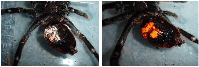 A trichocephalia öninváziója - Állatrendszertan I. kollokvium Állatismeret
